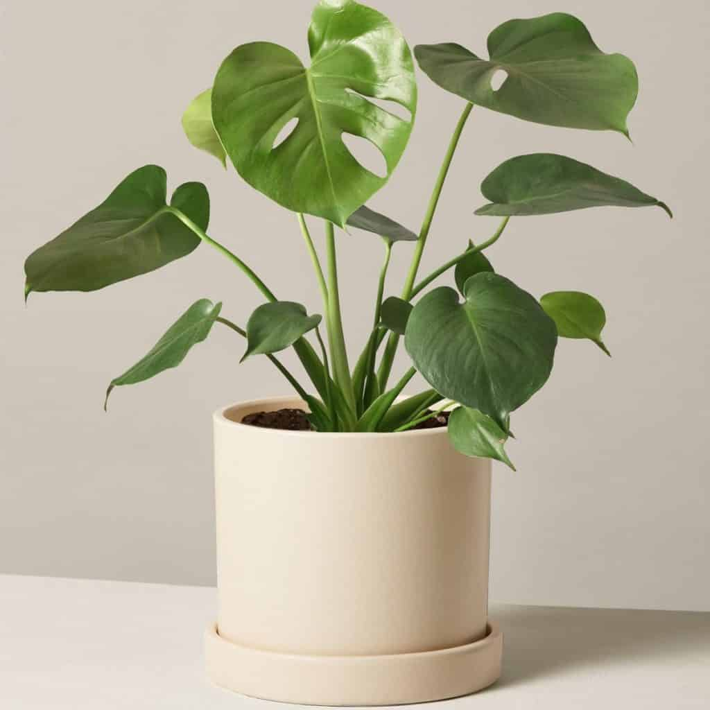 The Sill Plants Review
