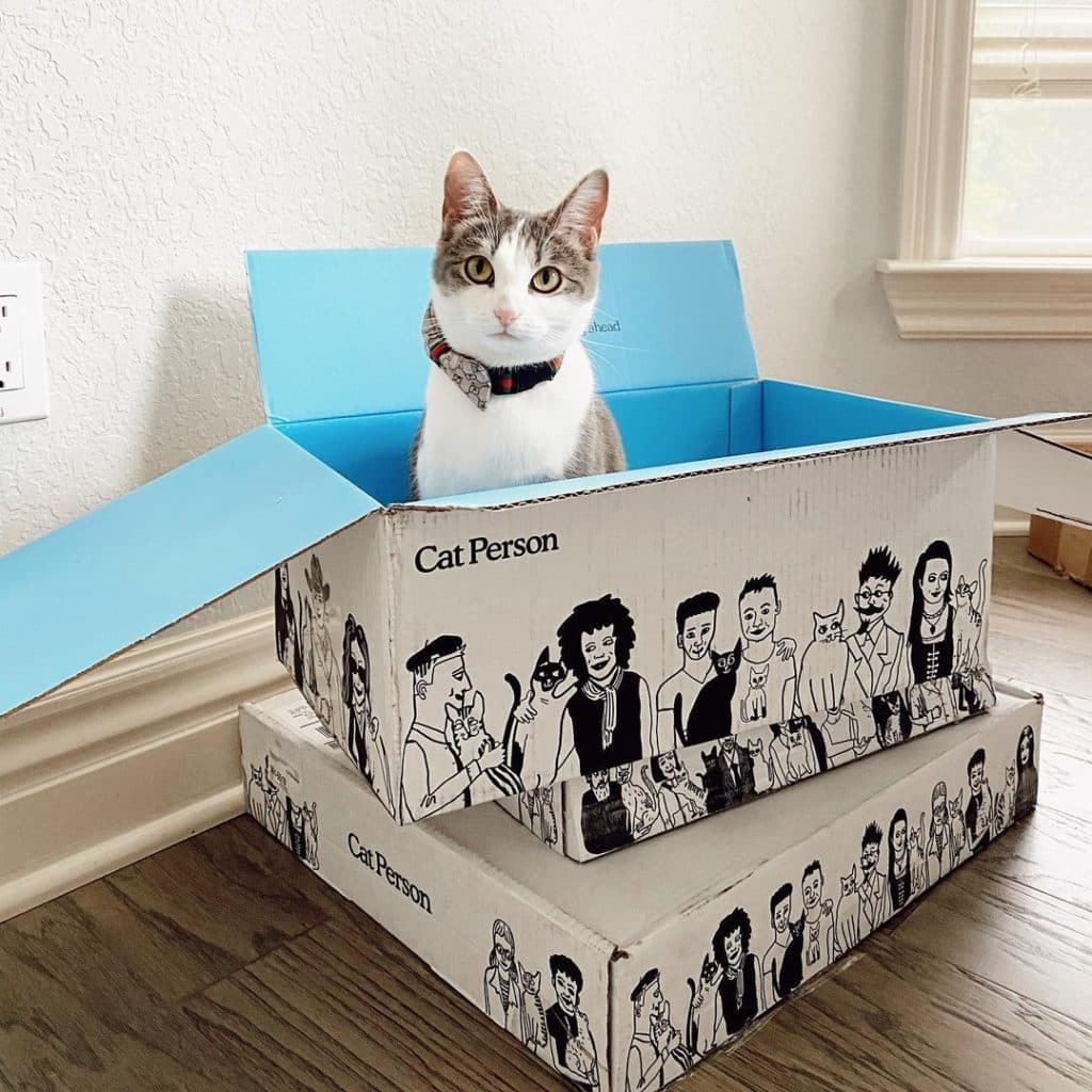 Cat Person Food Review